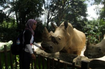 singapore zoo, badak putih