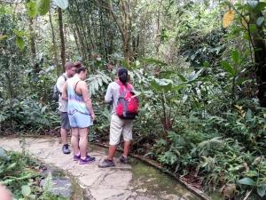 Botanical Garden menyimpan hampir semua vegetasi di Gunung Kinabalu. Foto: Silvia Galikano