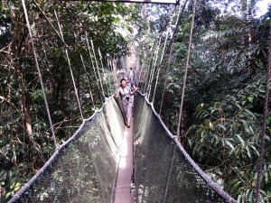 Jembatan gantung Poring Canopy Walk. Foto: Silvia Galikano