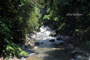 Sungai Mokoi, 3 km dari Porelea. Foto: Silvia Galikano.